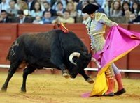 Bullfighting Spain