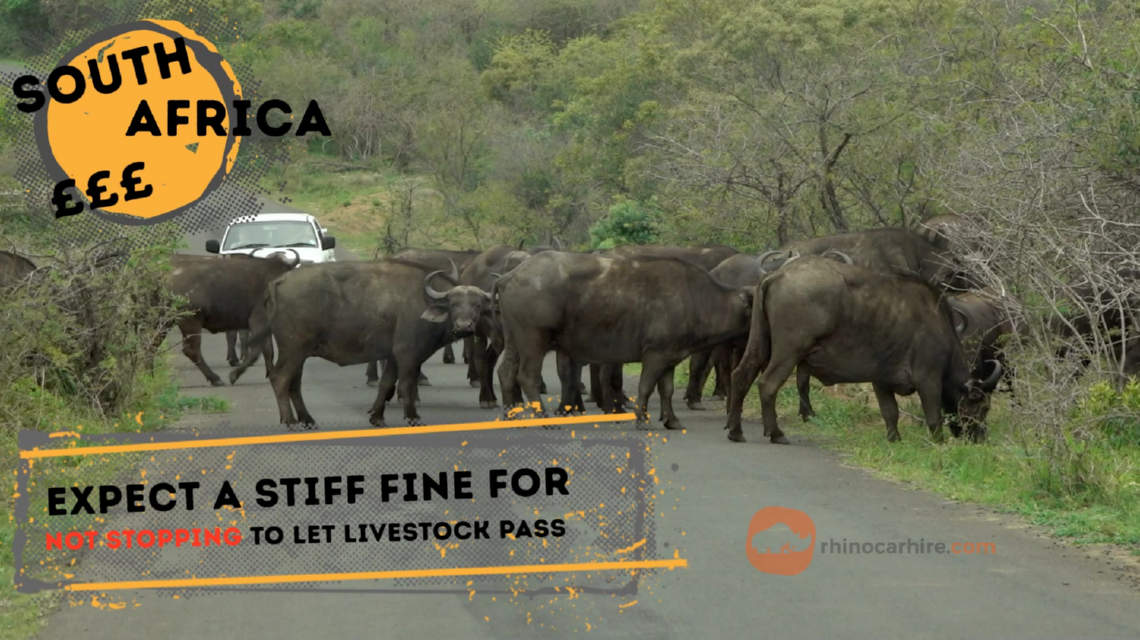 Illegal to not stop for passing animals in South Africa