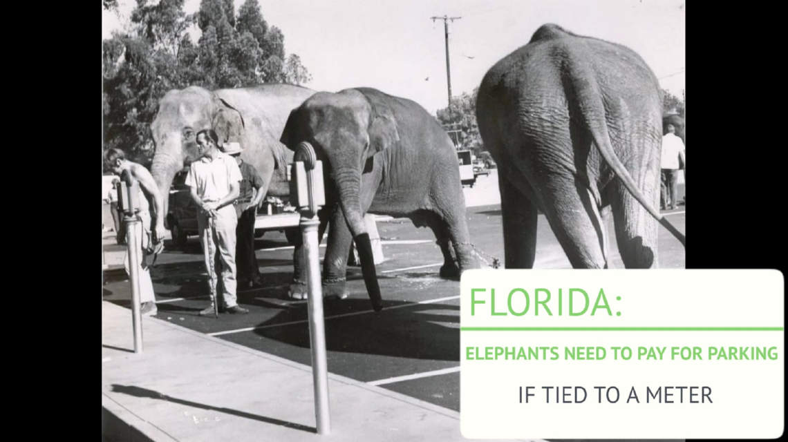 Elephants must pay parking if tied to a metere in Florida