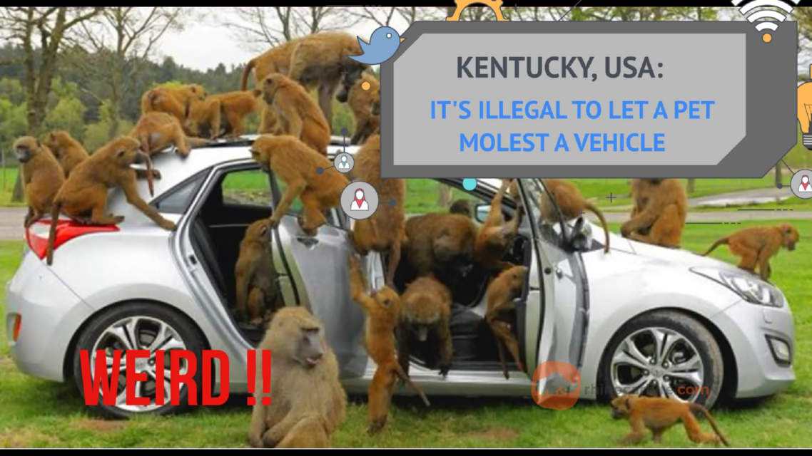 Pets are not allowed to molest a car in Kentuck, USA