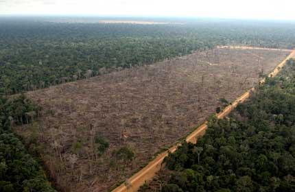 Amazon Rainforest - Lessons - Tes Teach