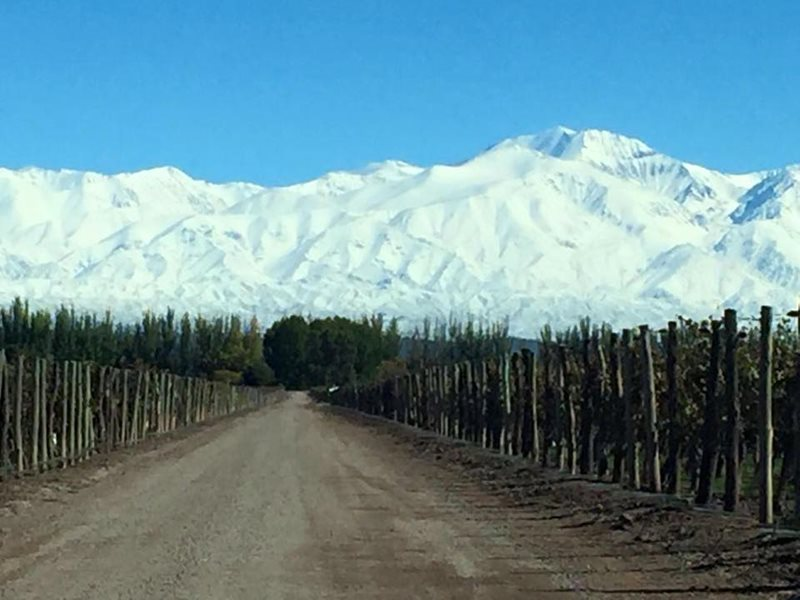 Mendoza Airport Vineyard