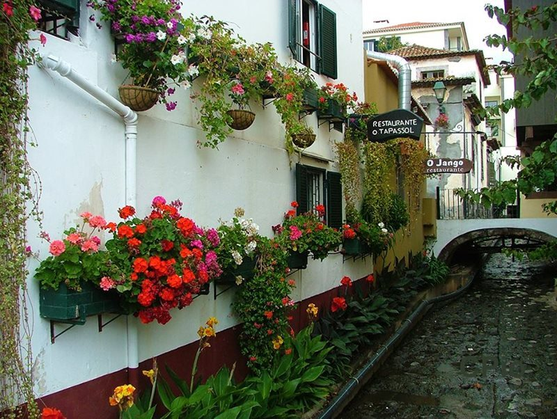 Funchal City flowers