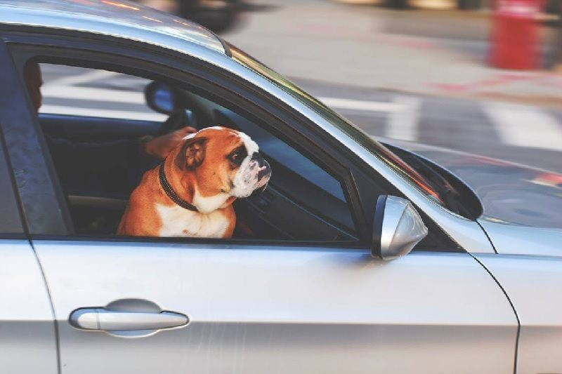 barking car hire