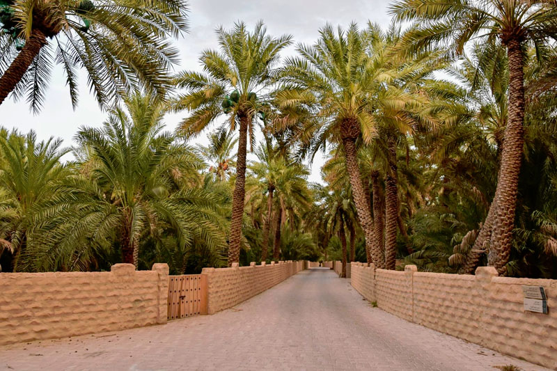 Al Ain Oasis And Take 'The World's Best Driving Road'
