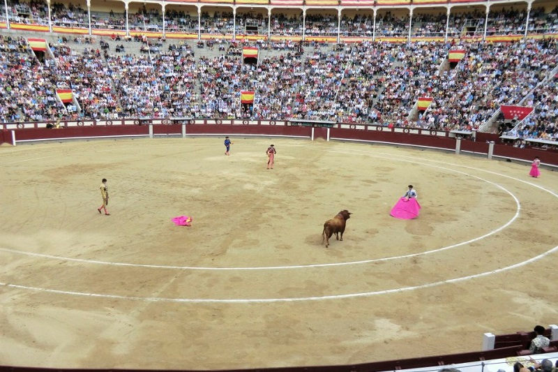 Go to a Bullfight